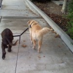Dog Walker in Elk Grove, CA