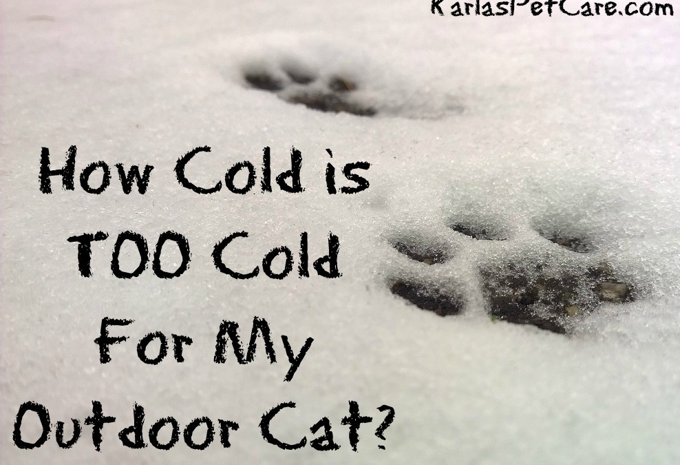 How Cold is Too Cold For My Outdoor Cat?