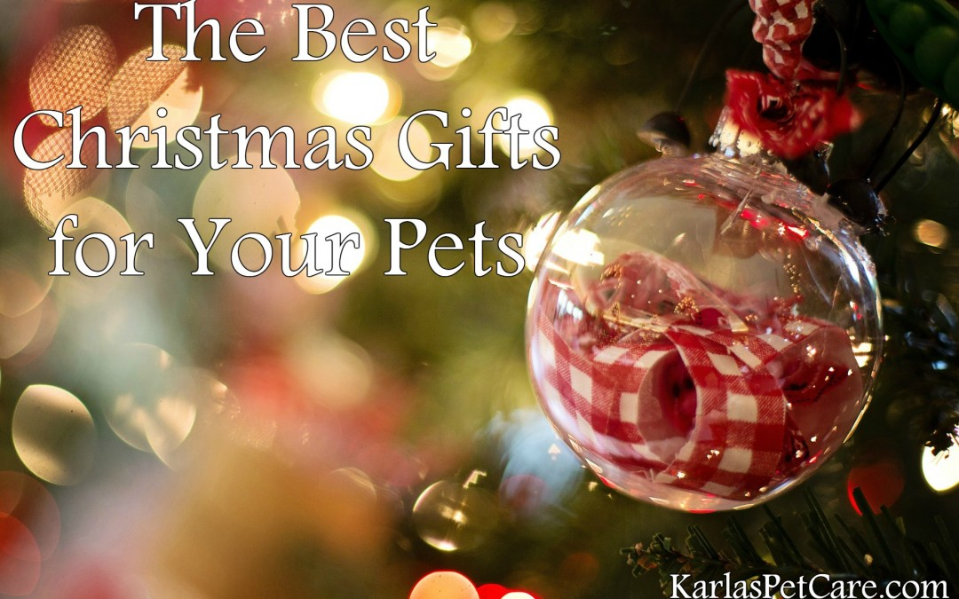The Best Christmas Gifts for Your Pets