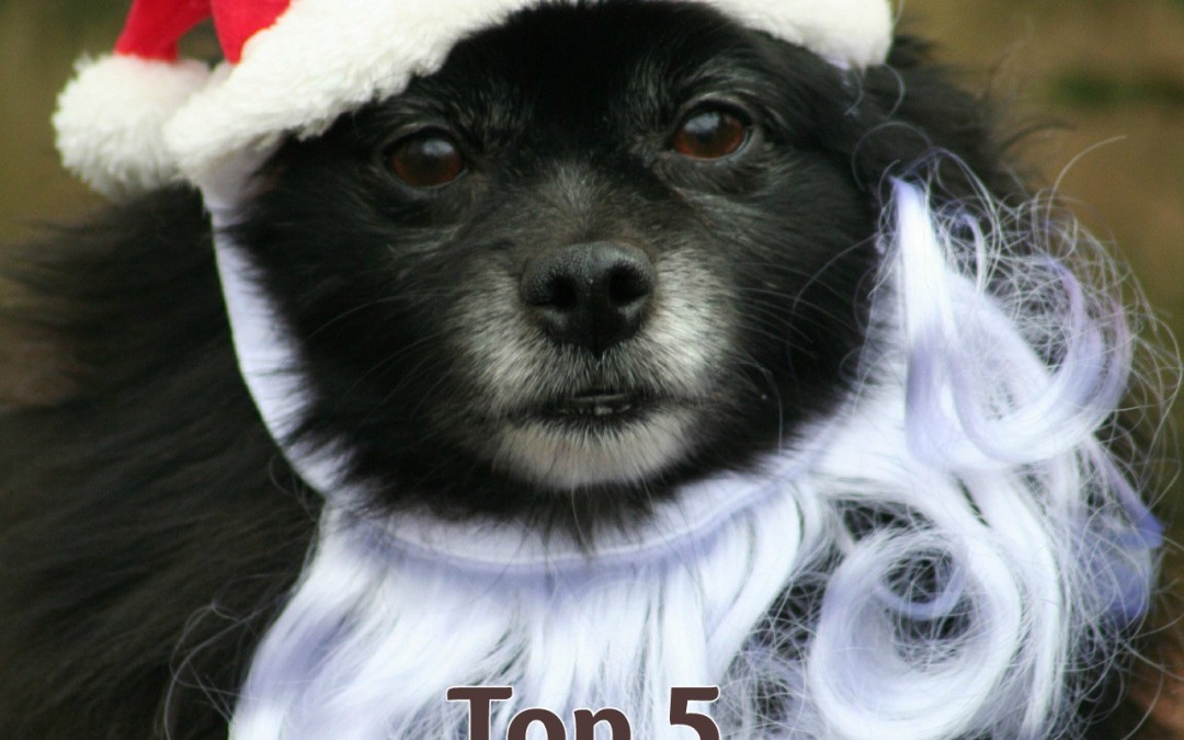 Top 5 Safety Tips for Dogs During the Holidays