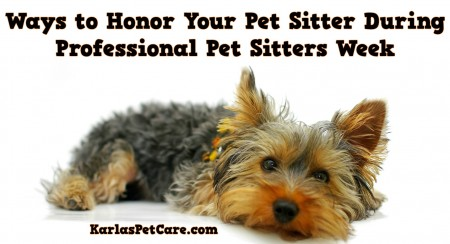 Ways to Honor Your Pet Sitter During Professional Pet Sitters Week