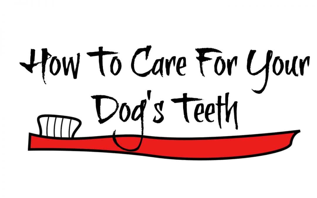 How To Care For Your Dog's Teeth