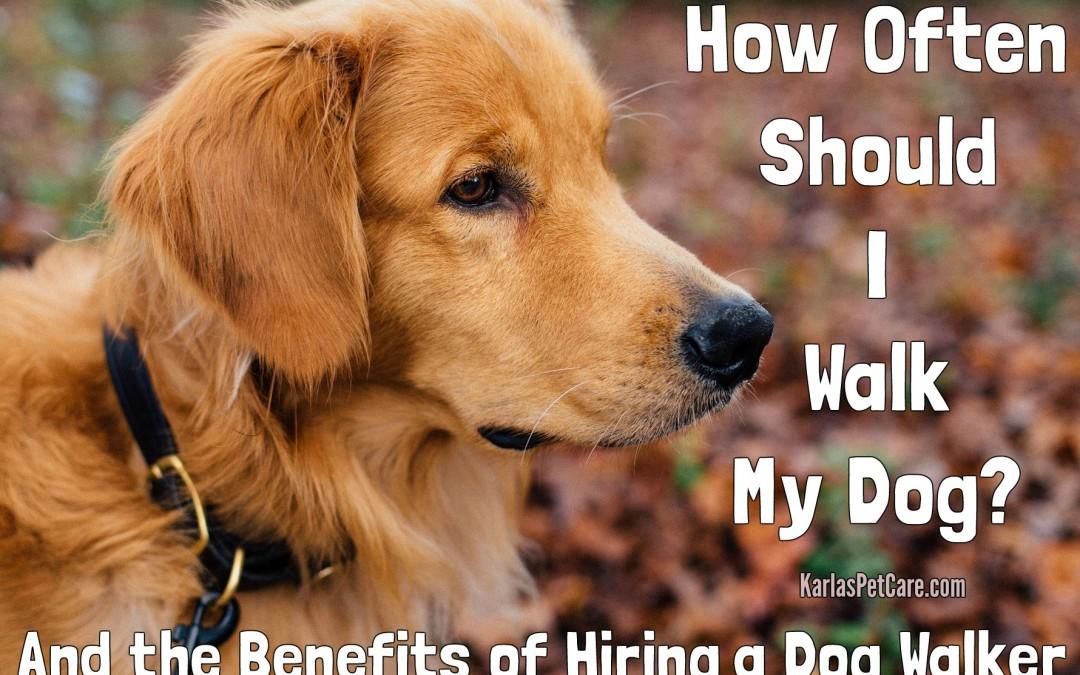 How Often Should I Walk My Dog? Benefits of Hiring a Dog Walker