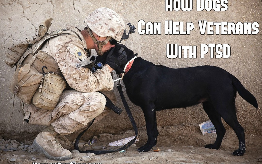 How Dogs Can Help Veterans with PTSD