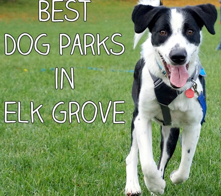 Best Dog Parks in Elk Grove