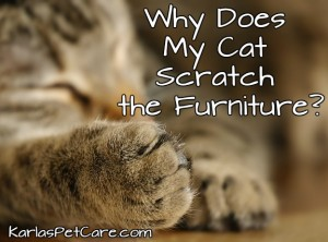 Why Does My Cat Scratch the Furniture?
