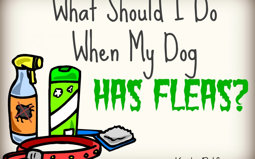 What Should I Do When My Dog Has Fleas?