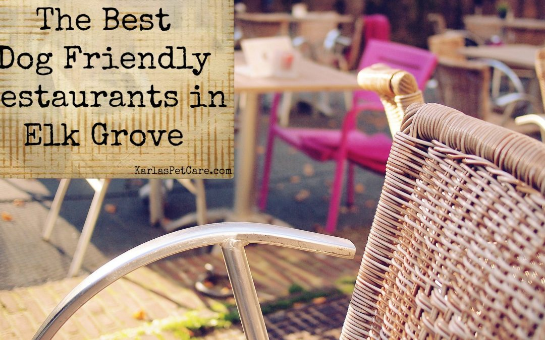 The Best Dog Friendly Restaurants in Elk Grove