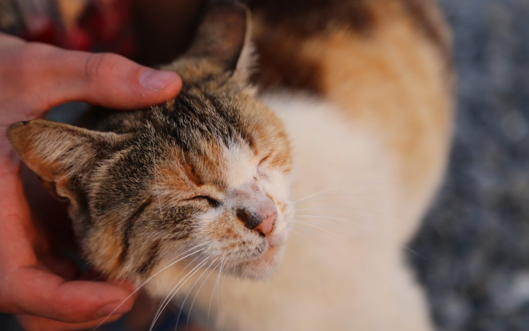 Why Does My Cat Purr?