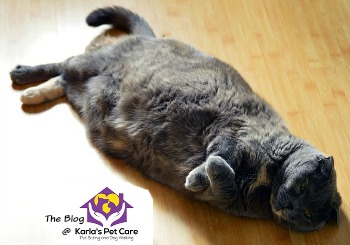 Is my Cat Fat? And How Much Should They Be Fed?