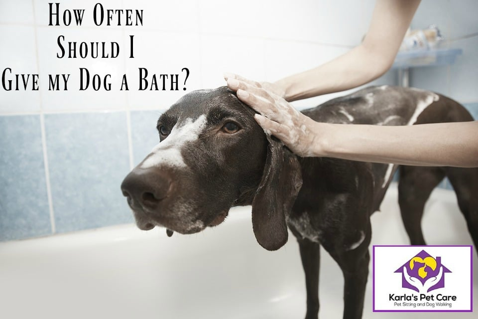 How Often Should I Give My Dog a Bath?