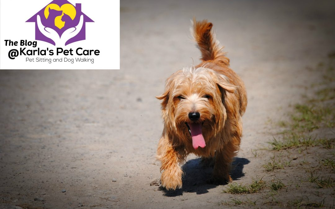 10 Ways to Keep Your Pet Cool in Hot Weather
