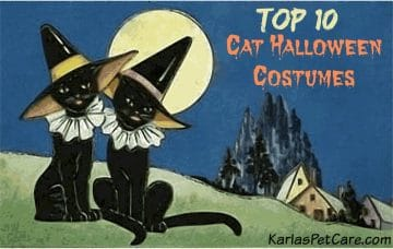 Top 10 Halloween Costumes For Cats