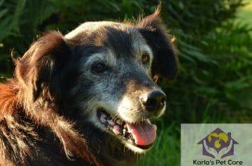 The Hidden Joys of Adopting Senior Pets