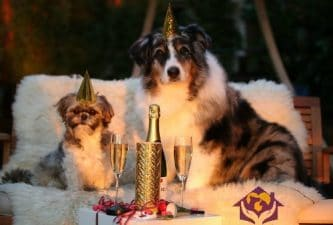 New Year's Resolutions to Make with Your Pet