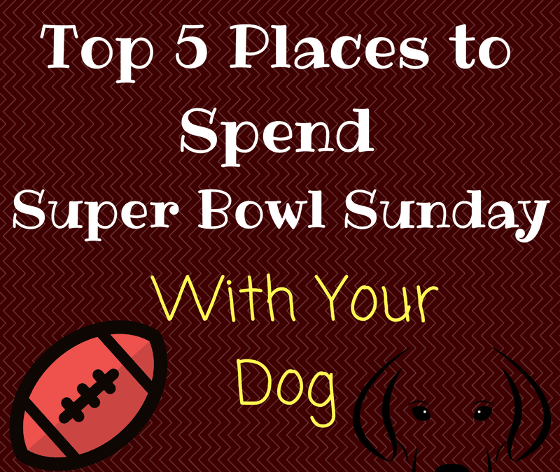 Top 5 Places to Spend Super Bowl Sunday with Your Dog