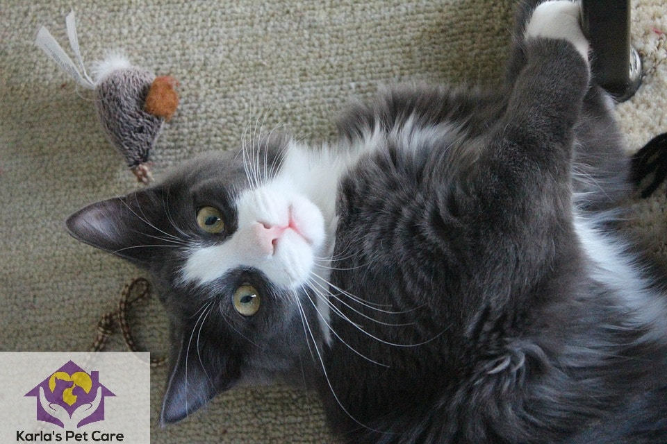 Top 30 Fun Activities To Do with Your Cat