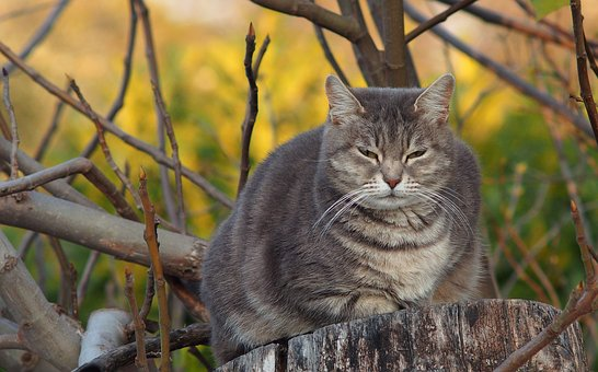 Animal Obesity – Are Fat Pets Really Happy Pets?