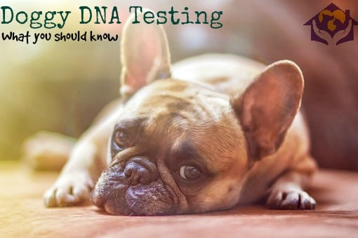 Doggy DNA Testing – What it tells you and why you should consider it