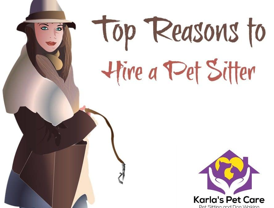 Top Reasons to Hire a Pet Sitter