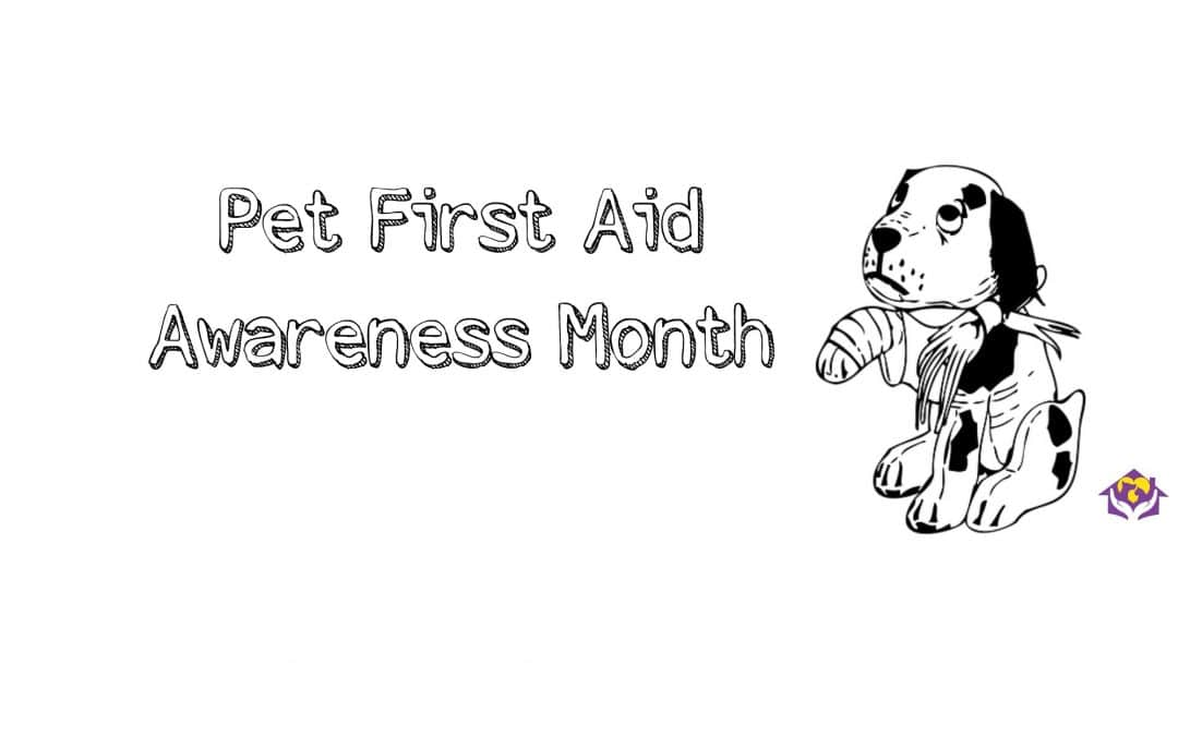 April is Pet's First Aid Awareness Month – Learn the Basics You Need to Know