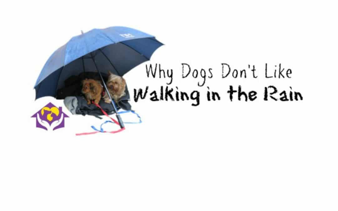 April Showers: Why Dogs Don't Like Walking in the Rain