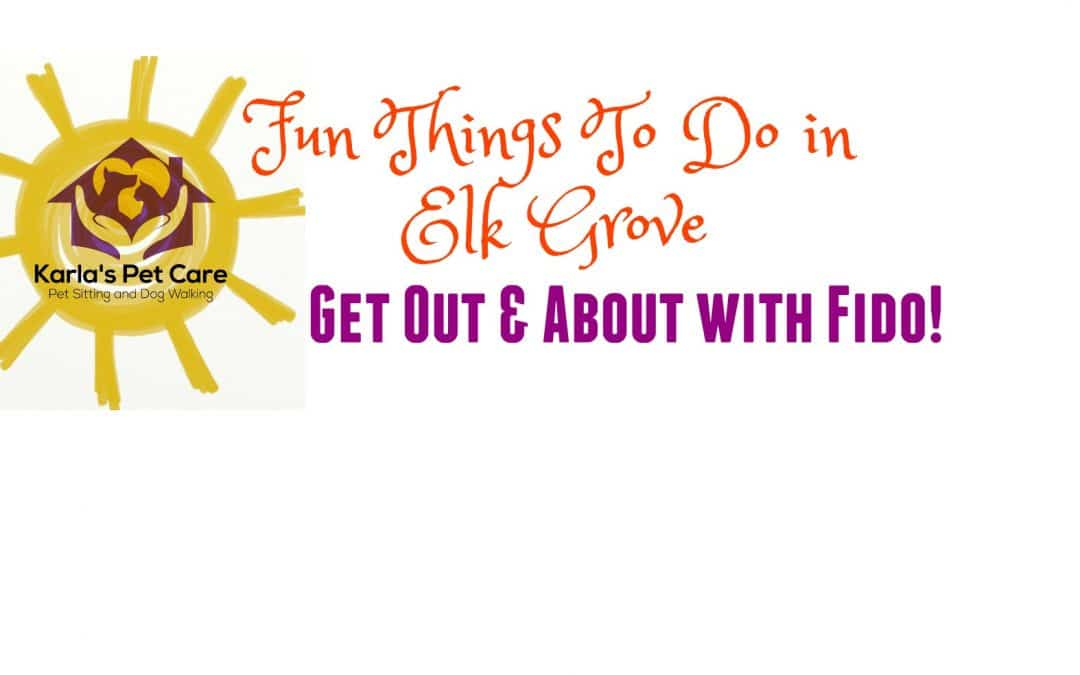 Fun Things To Do in Elk Grove – Get Out & About with Fido!