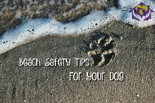 Beach Safety Tips for Your Elk Grove Dog