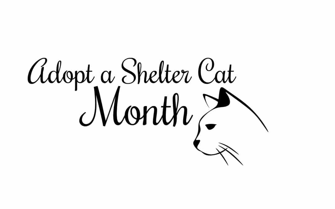 Help Cats in Need – June is Adopt a Shelter Cat Month