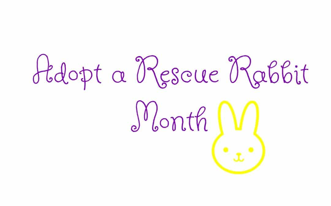 July is Adopt a Rescue Rabbit Month