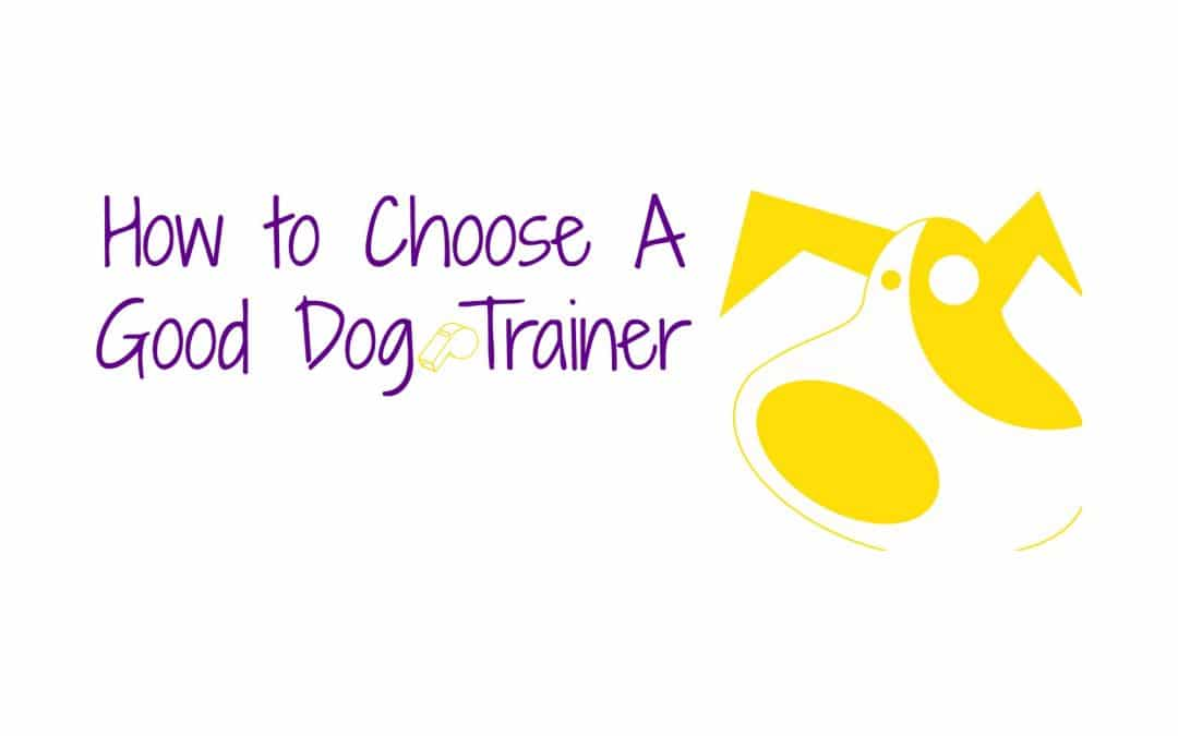 How to Choose A Good Dog Trainer