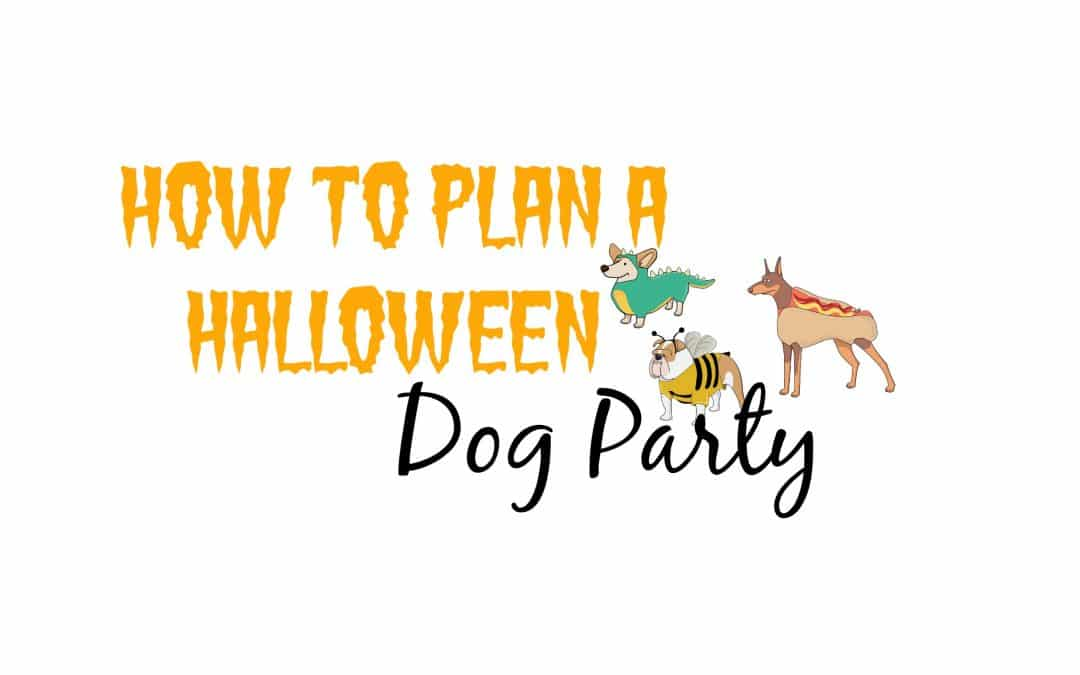 Tips on How to Plan a Halloween Dog Party