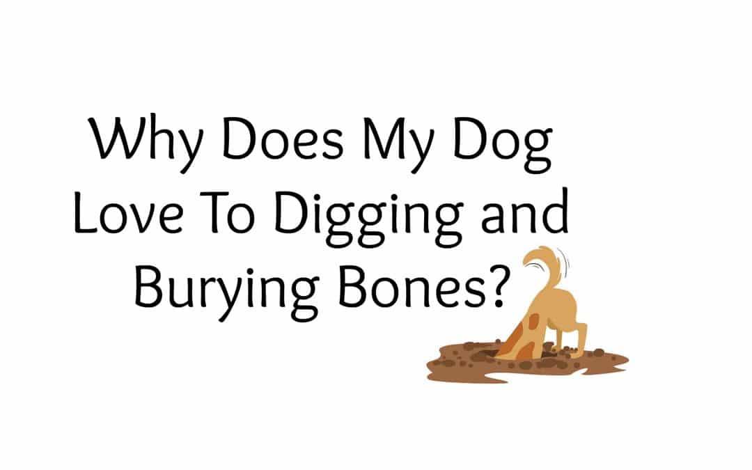 No Bones About It – Dogs Love to Bury Bones