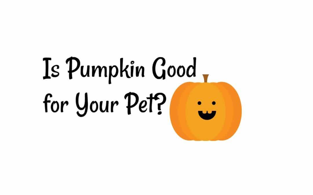Is Pumpkin Good for Your Pet?