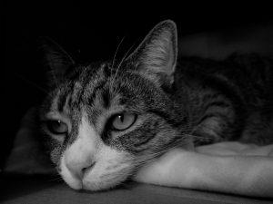 cat boredom