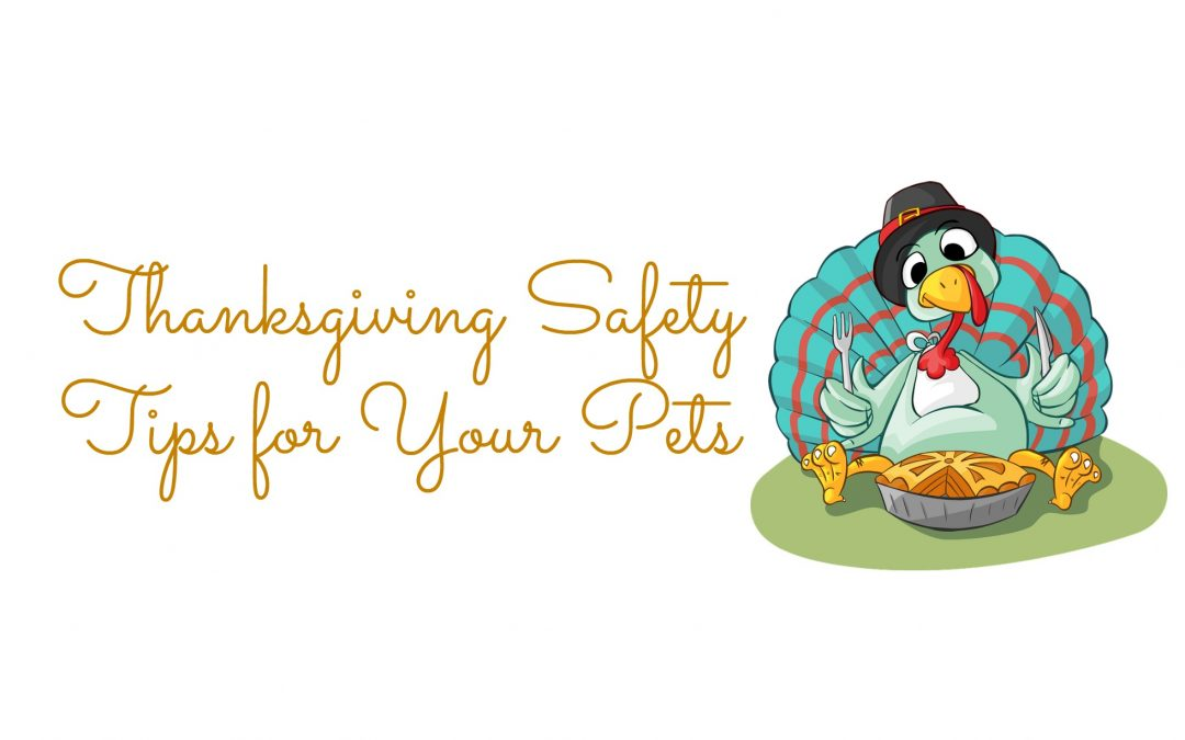 Thanksgiving Safety Tips for Your Pets