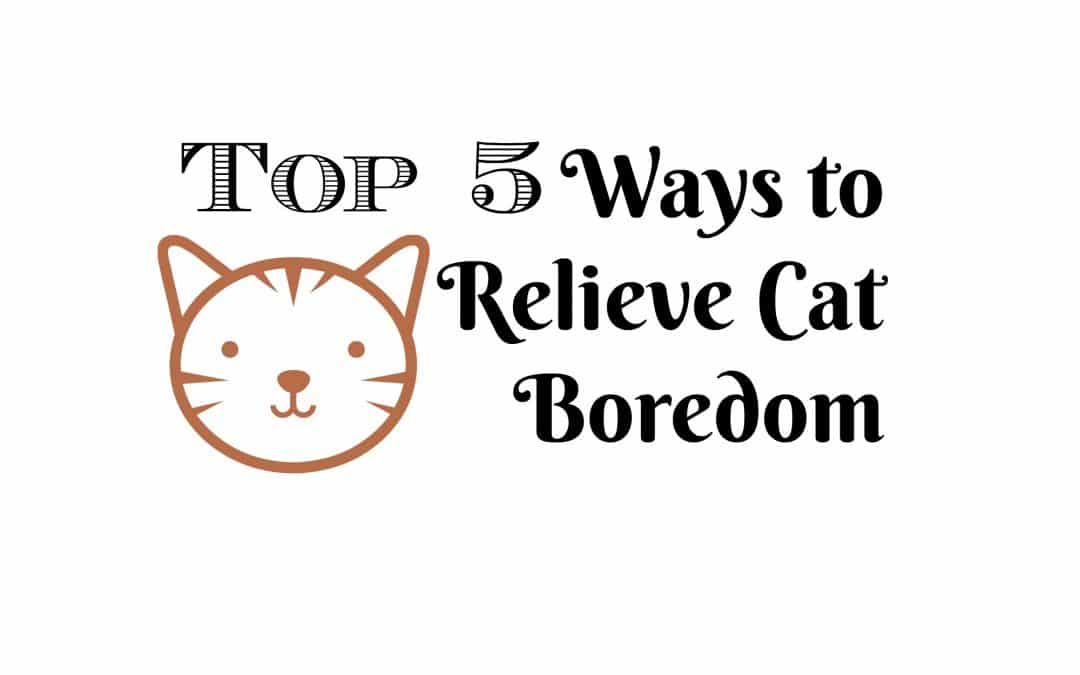 Top 5 Ways to Relieve Cat Boredom