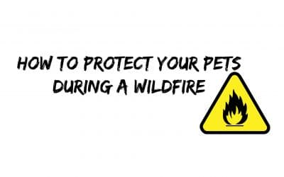 How to Protect Your Pets During a Wildfire