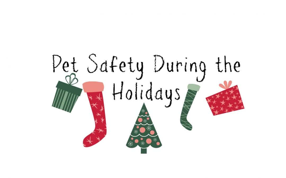 Pet Safety During the Holidays