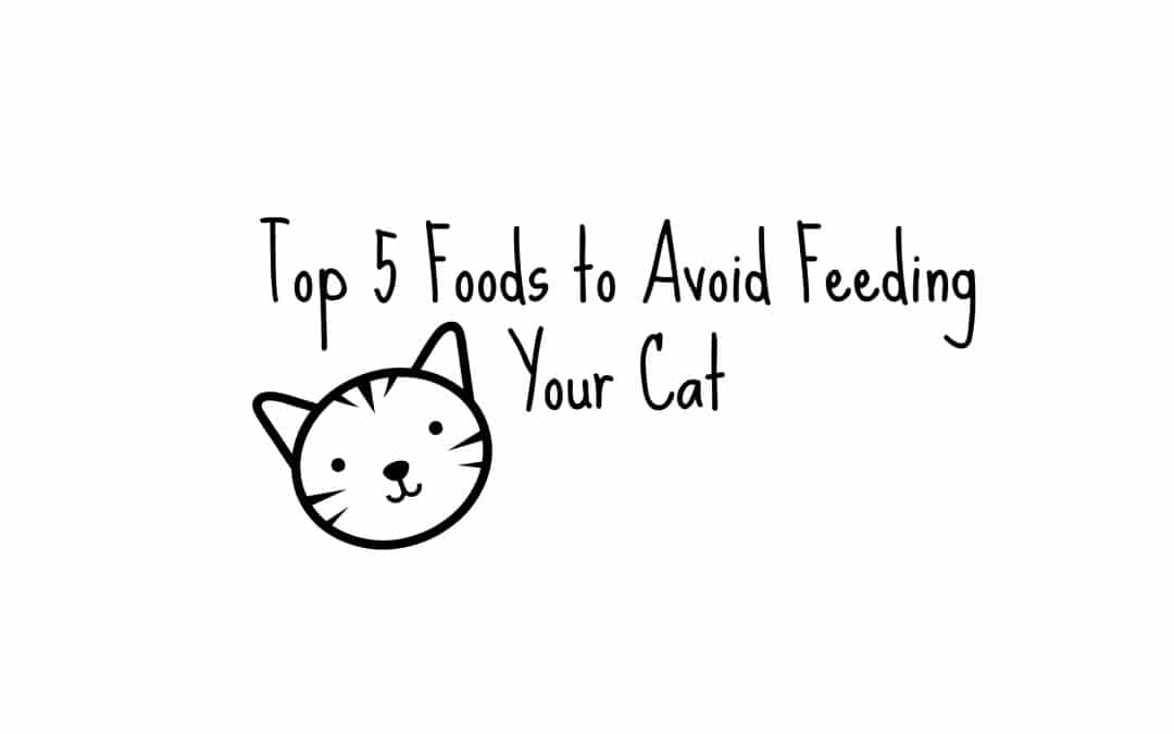 Foods to Avoid Feeding Your Cat