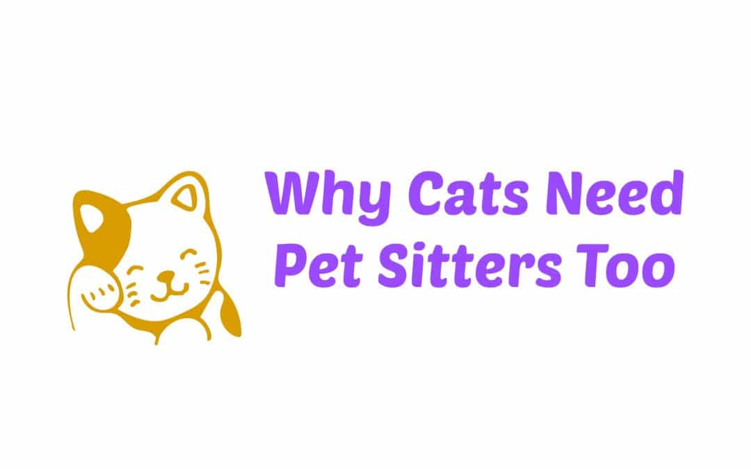 Why Cats Need Pet Sitters Too