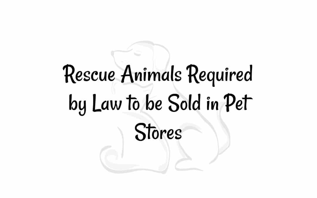 California is Firsts: Rescue Animals Required by Law to be Sold in Pet Stores