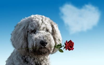Spend Valentine's Day with Your Pet!