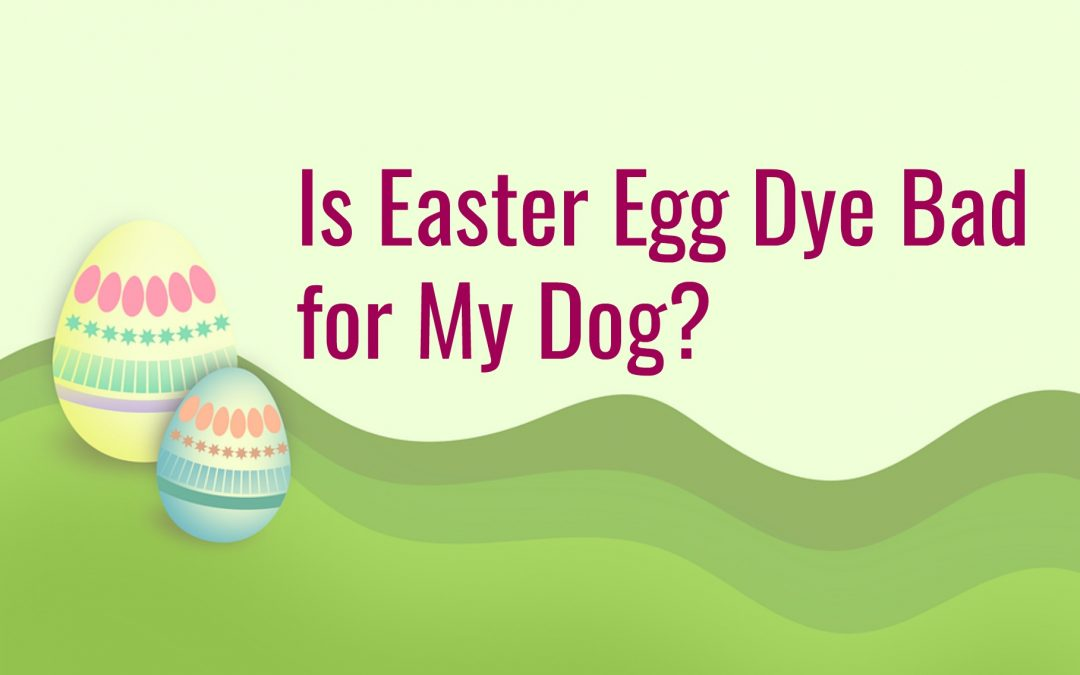 Is Easter Egg Dye Bad for My Dog?