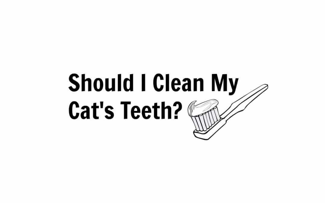 Should I Clean My Cat's Teeth?