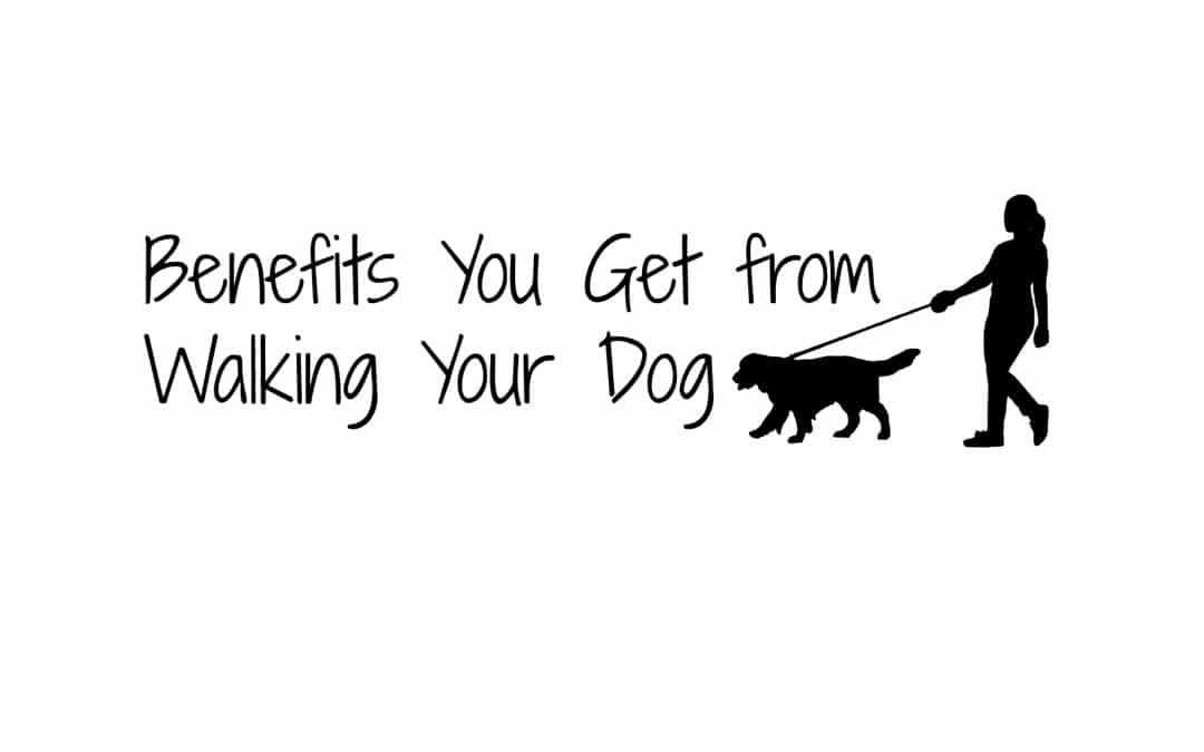 Benefits You Get from Walking Your Dog