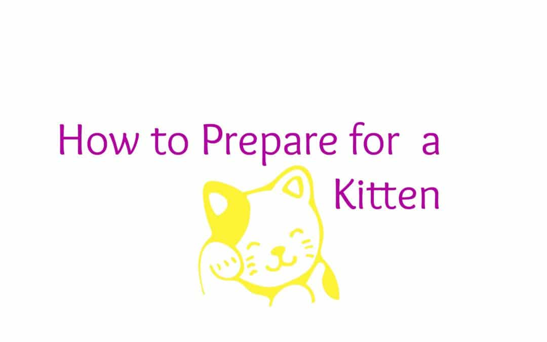 How to Prepare for  a Kitten