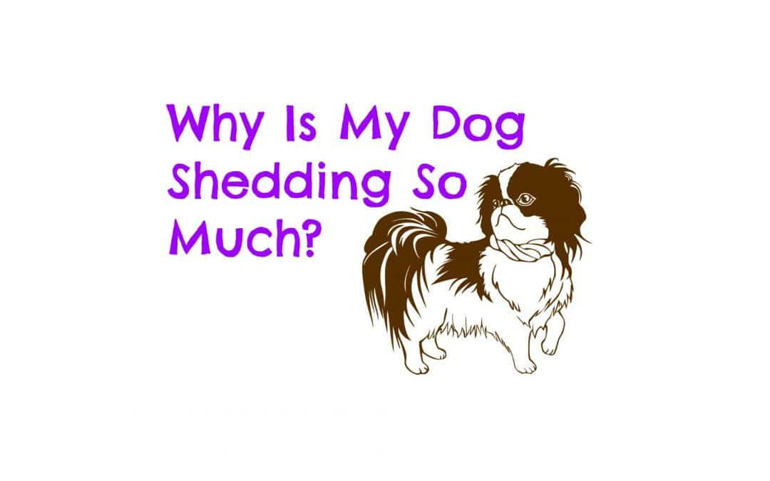 Why Is My Dog Shedding So Much?