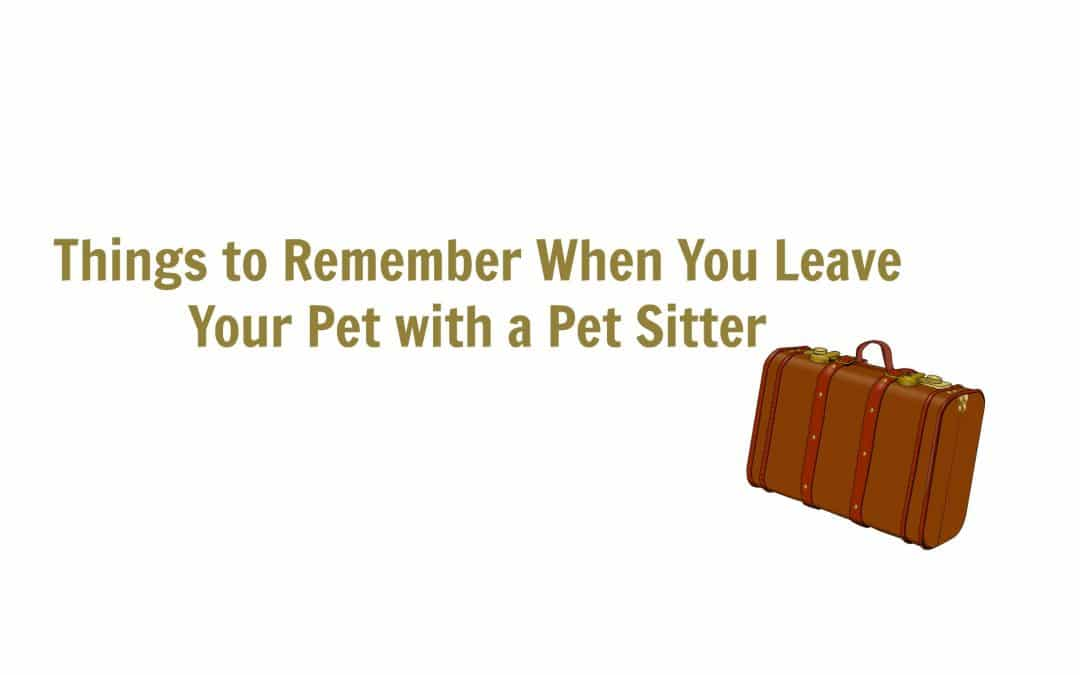 Things to Remember When You Leave Your Pet with a Pet Sitter