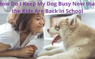 Keep Your Dog Busy with a Pet Sitter